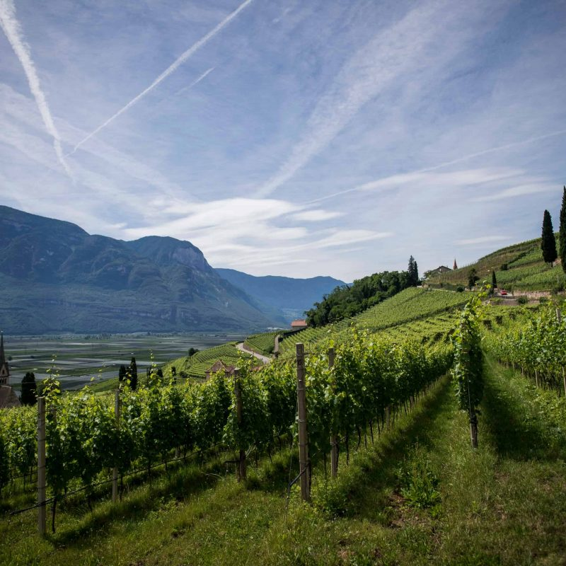 image of a wine vineyard